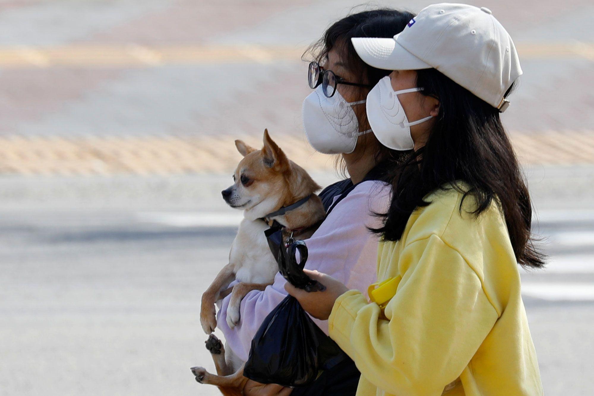 Blog animaux : faut-il consulter un vétérinaire ?